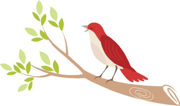 nativbird